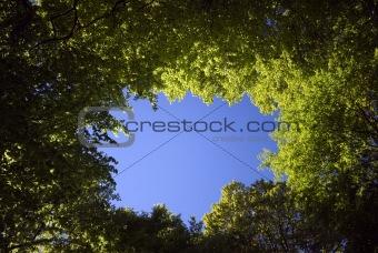 Sky blue springtime