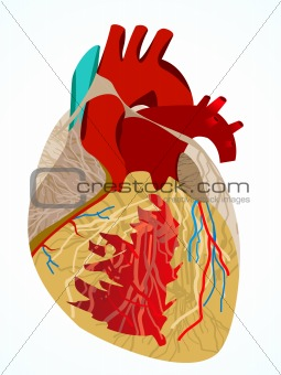 abstract human heart