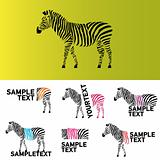 Vector zebra illustration and logos for corporate branding