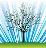 Spring vector tree from seasonal set