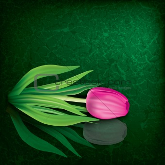 abstract floral illustration with tulip