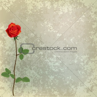 abstract grunge floral background with red rose