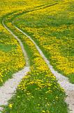 Path with Dandelions