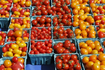 Small red orange and yellow tomatoes