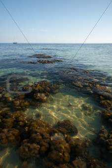 Coral Reef Low Tide Horizon Crystal Clear Water