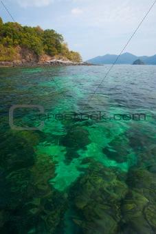 Green Clear Ocean Bottom Coral Reef Thailand