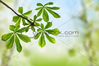 green leaves of chestnut on spring background
