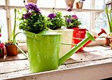 Garden - Watering can