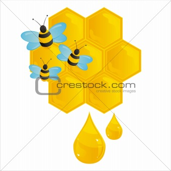 honeycombs with bees isolated on white