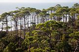 Forest by the sea