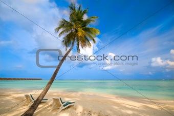 beautiful empty beach with a single palm tree