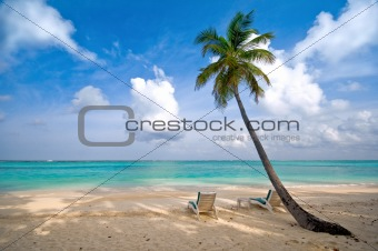 beach, sea and coconut palm tree