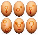 Egg gender