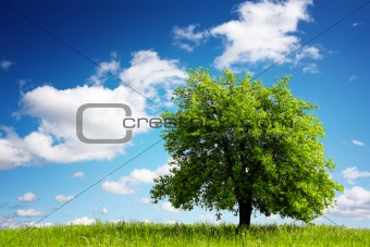 Tree on green meadow