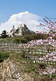 Castle Duernstein in Springtime