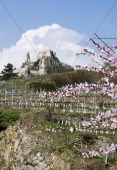 Castle Duernstein in Springtime