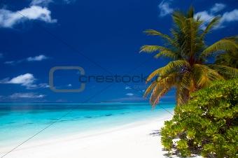 summertime at a tropical beach
