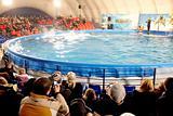 In dolphinarium