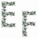 Hand drawing ornamental alphabet. Letter EF