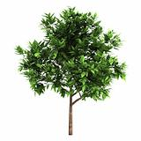 3d Green tree on a white background