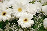 White flowers backdrop - chrysanthemums and roses