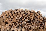 Firewood put in heap