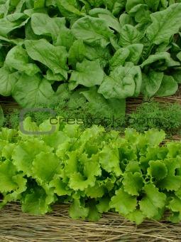greens organic