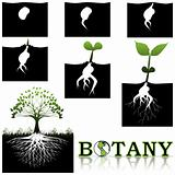 Botany