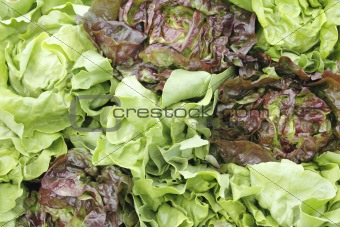 Green and red lettuce display