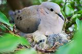 Bird and puppy in nest