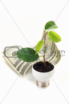 green sprout on the dollar