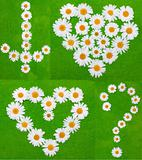 Daisywheels on green background