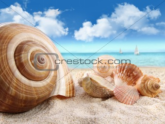 Seashells on the beach