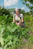 Smiling gardener in vegetable garden.