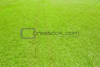2816 Green grass(63).jpg