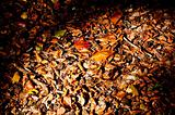 fallen leaves from trees in autumn