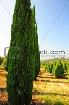 Garden in Tuscany