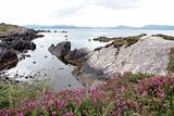 castlegregory wild flowers view