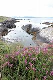 coastal kerry wild flowers view