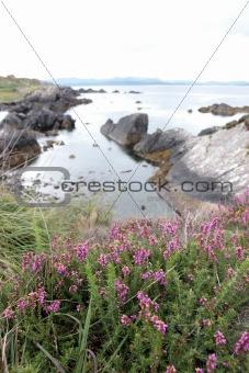 coastal kerry wild flowers view