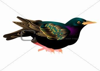colorful vector bird