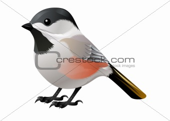 colorful vector bird