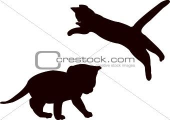 baby cat - vector