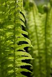 Green fern leaves in the sun