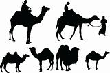 camels collection - vector
