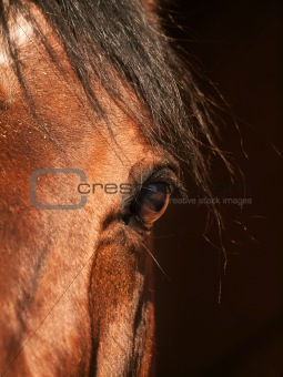 eye of bay horse closeup in dark