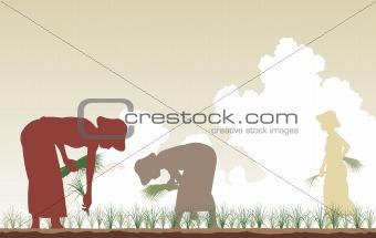 Rice planters