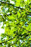 Beutiful green leaves against blurry background