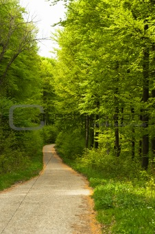 A road in the forest leading down the hill