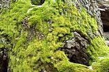 Bright green moss on tree trunk